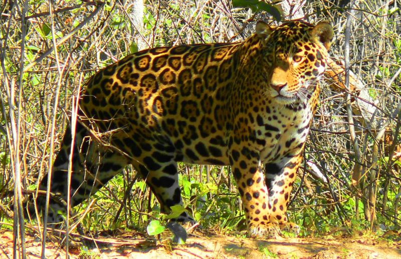 Pantanal Pousada Santa Clara - Photo Gallery